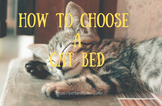 how to choose a cat bed