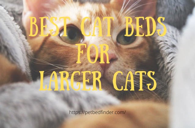 Best Cat Bed For Large Cats Pet Bed Finder