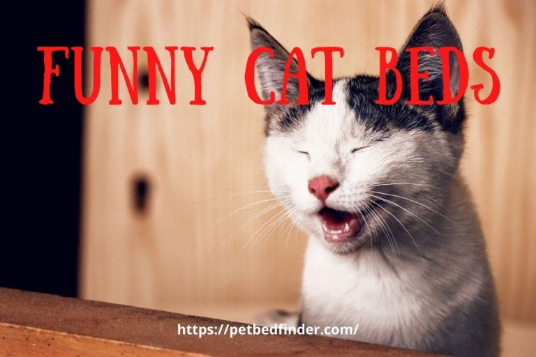 Funny Cat Beds