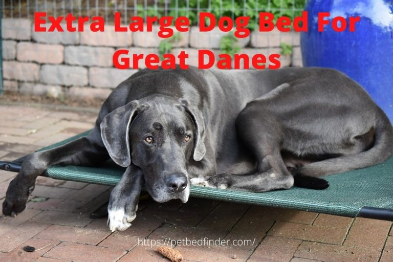 Extra Large Dog Bed For Great Danes