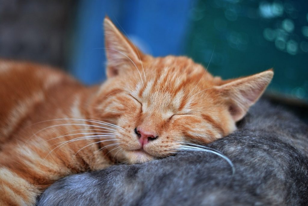 Why Do Cats Sleep So Much During The Day?