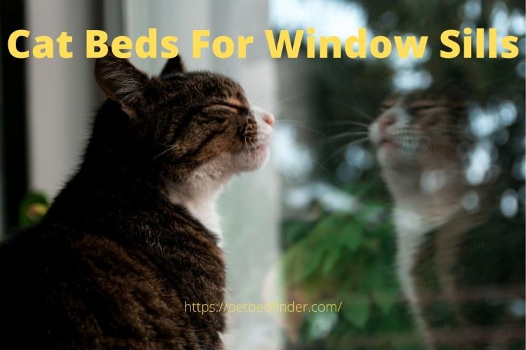 Cat Beds For Window Sills
