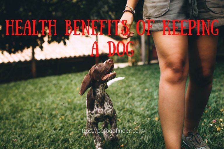 Health Benefits Of Keeping A Dog