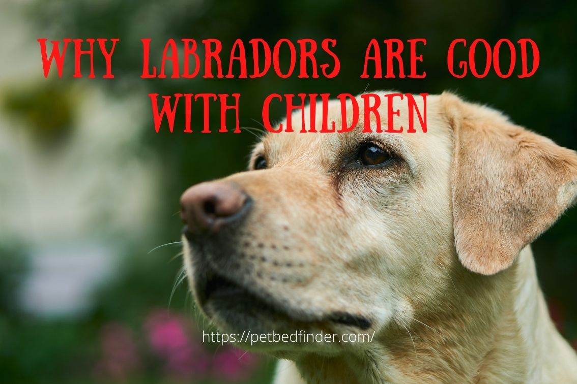 why labradors are good with children