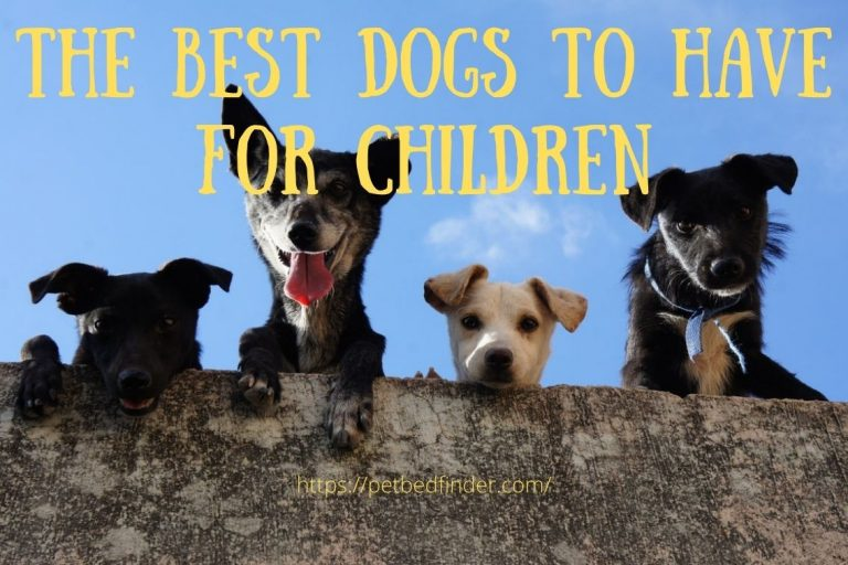 The Best Dogs to Have for Children